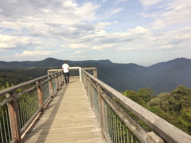 Dorrigo Rainforest Skyview
