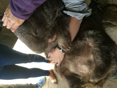 Petting Patrick the Wombat