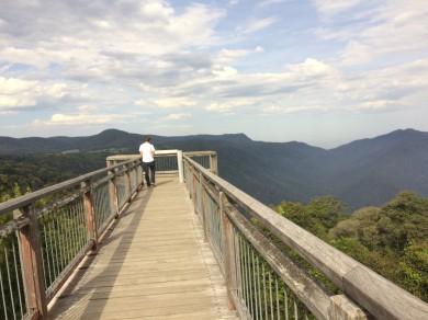 Dorrigo Rainforest Skyview